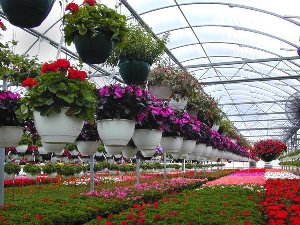 В круглогодичной теплице для цветов необходимо обеспечивать хорошую вентиляцию