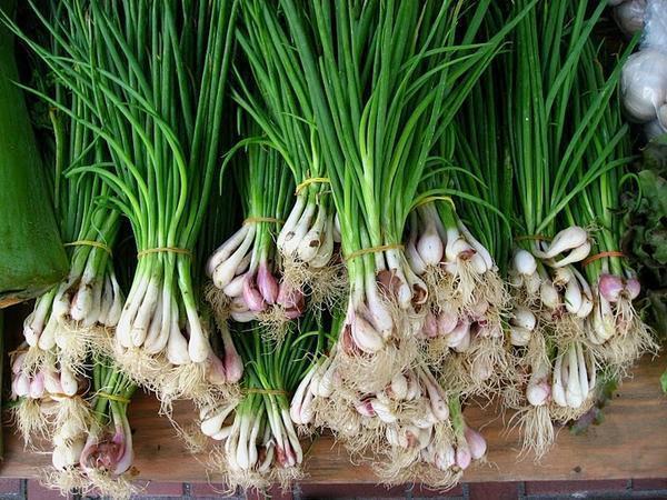 Чеснок лучше всего выращивать в тепличных условиях