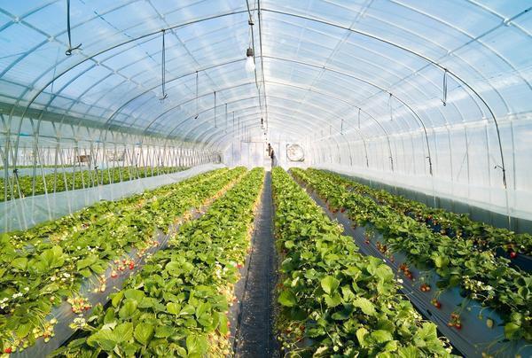 купить теплицу для круглогодичного выращивания