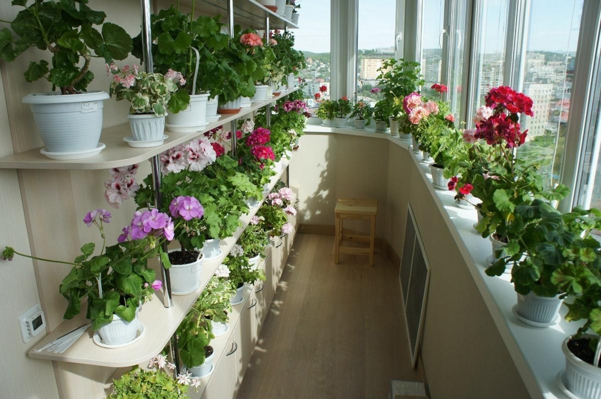 Красиво на балконе разместить цветы фото шестой серии