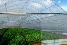 Greenhouse-Construction-105