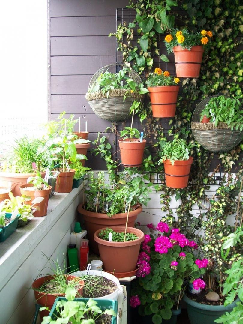 Красиво на балконе разместить цветы фото диснейленд ходят