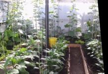 as-raspolojit-beds-in-greenhouse-1024x576