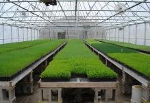 big-greenhouse