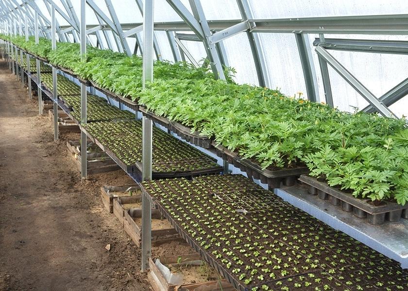 Выращивание овощей в теплицах как бизнес 33