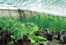 greenhouse-04