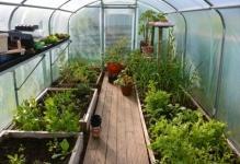 greenhouse-03-640x427