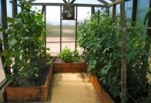 greenhouse-05-640x480