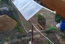 Урожай без проблем: крыша из поликарбоната для теплицы