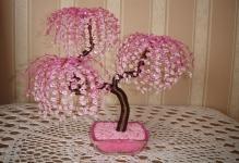 biserinfo17457sakura-v-cvetu1255430343