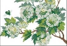 Riolis-Flowering