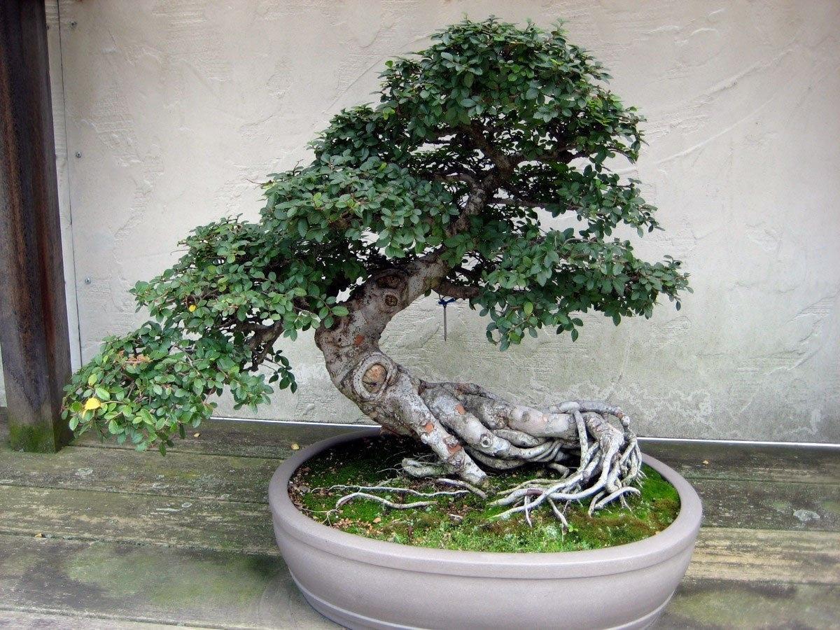 Садовые бонсаи своими руками фото 346