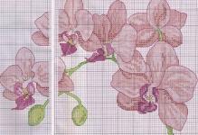 Orhidei1
