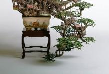 bonsai-treehouse-takanori-aiba