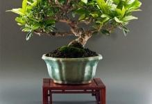 pots49-bonsaipot09