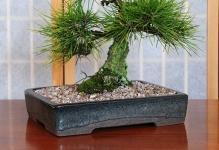 pots50-bonsaipot10