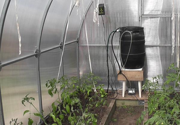 Система капельного полива для теплицы обеспечивает необходимую влажность воздуха