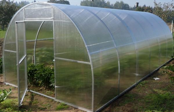 Основным предназначением теплицы Мария Делюкс является выращивание овощей не только на больших огородных участках, но и в маленьких садах и небольших дачах