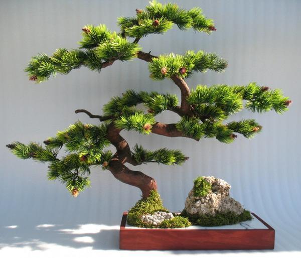Чтобы создать интересную композицию, можно <em>сосна</em> использовать различные растения и подручные материалы