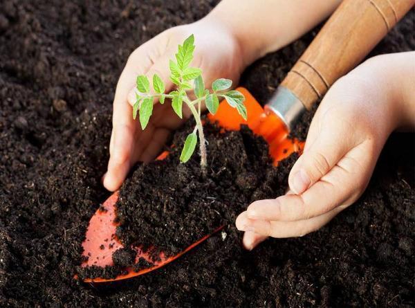 Перед посадкой рассады нужно определить кислотность почвы