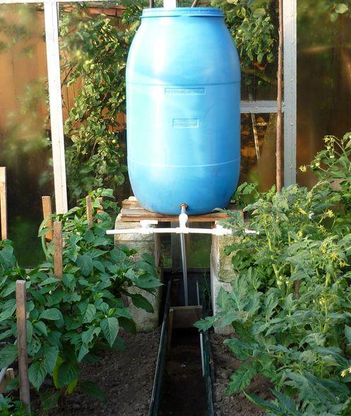 Капельный полив из бочки для теплицы – это надежный способ значительно упростить себе уход за растениями