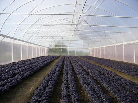 Фермерские теплицы наиболее часто используются в агропромышленных комплексах