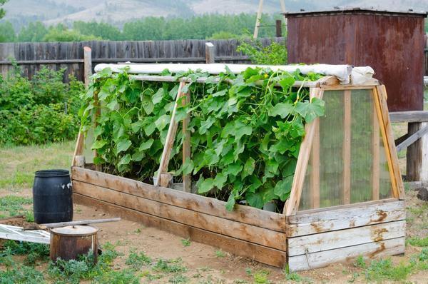 Самый простой парник из дерева позволит хозяевам полакомиться овощами в более ранние сроки
