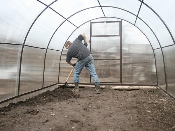 Важный момент - подготовка почвы в теплице