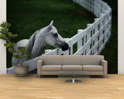 Невероятно реалистичные  3Д фотообои станут  настоящим украшением домашнего интерьера