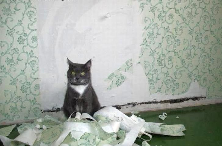Прежде, чем воспитывать кота, важно разобраться в причине его поведения
