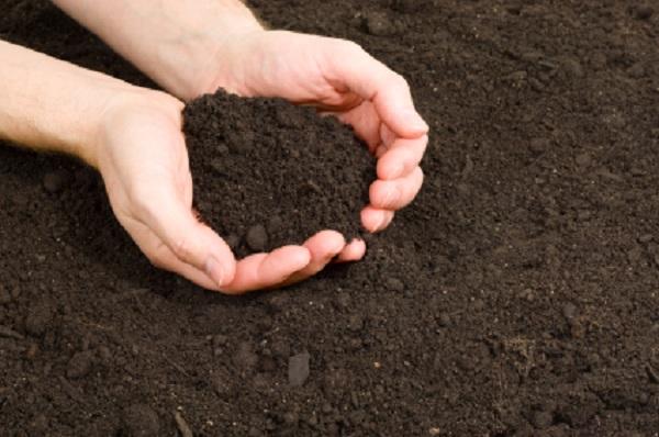 Для выращивания растений в теплице нужен правильный температурный режим воздуха и почвы