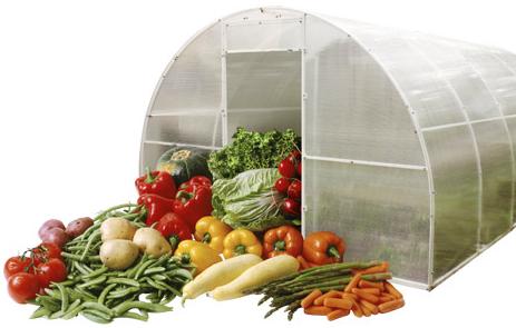 Что выращивать в теплицах интересует не только дачников любителей, но и бизнесменов
