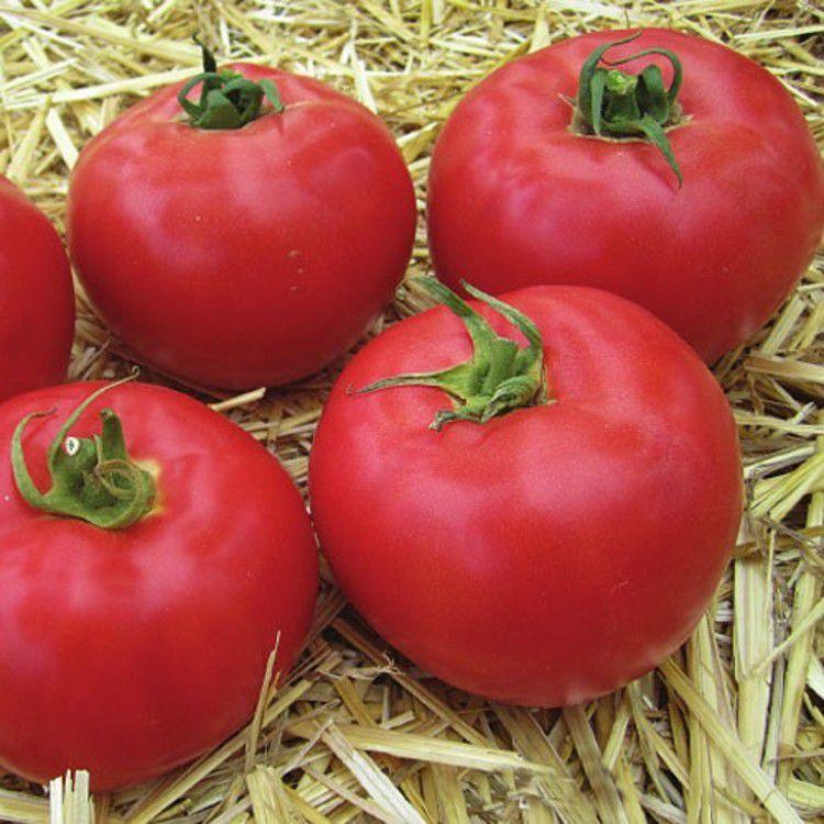 ранние сорта томатов для теплицы