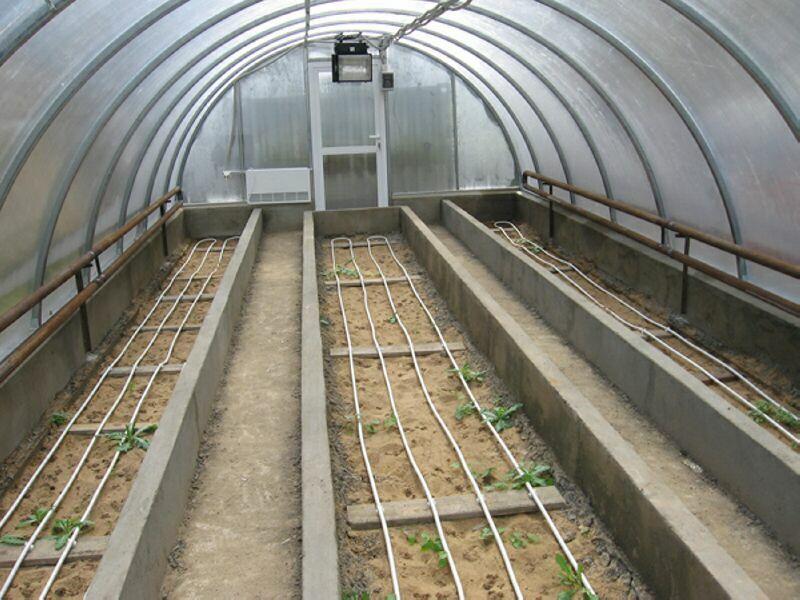 Зимняя теплица даст возможность выращивать овощи круглый год