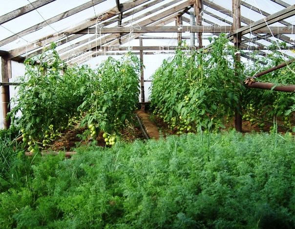 теплица для выращивания зелени купить в Украине