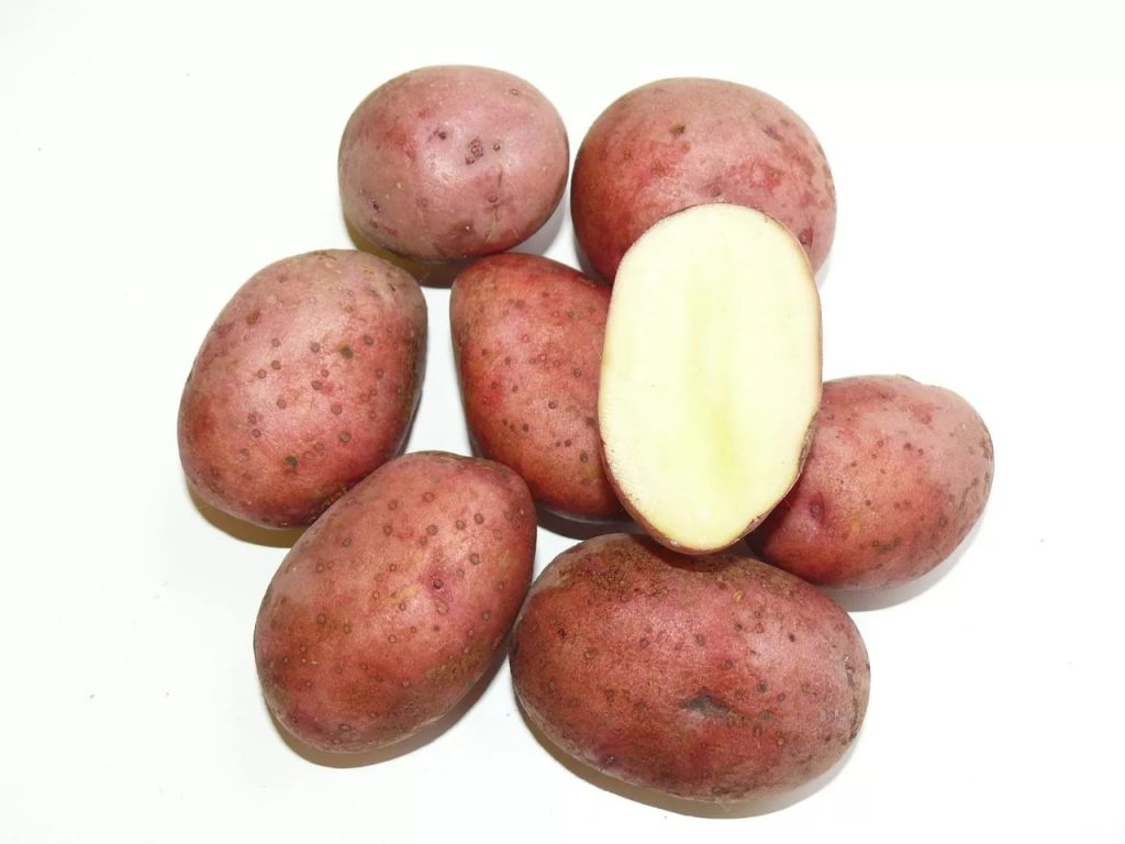 Клубни картофеля Любава