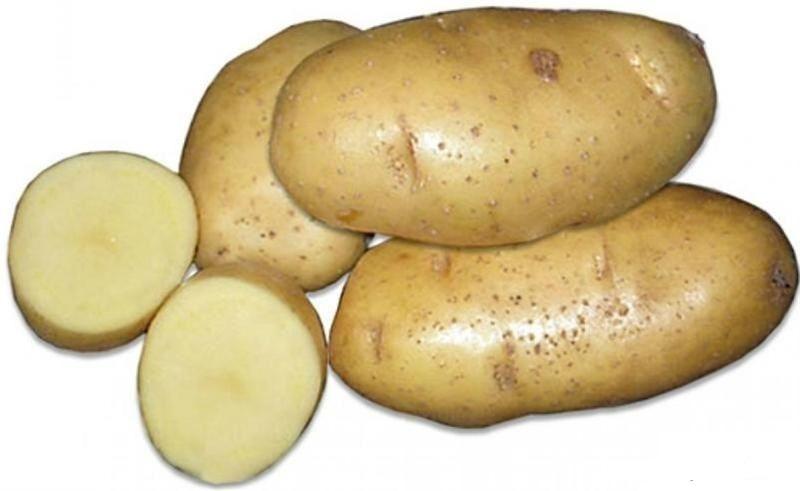 Картофель Удалец