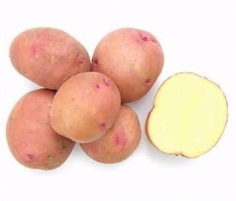 Сорт картофеля Соточка