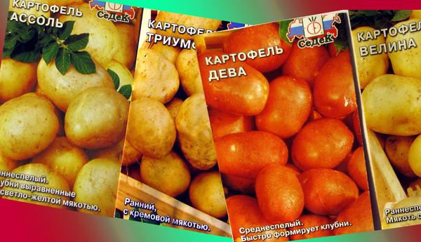 Семена картофеля разных сортов