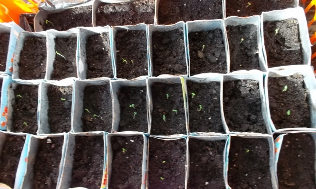 Посев семян в индивидуальную тару
