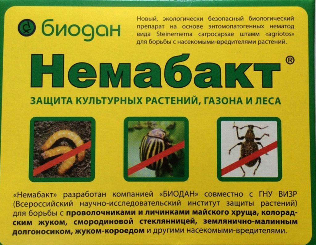 Хищные нематоды препарата Немабакт уничтожают вредителей