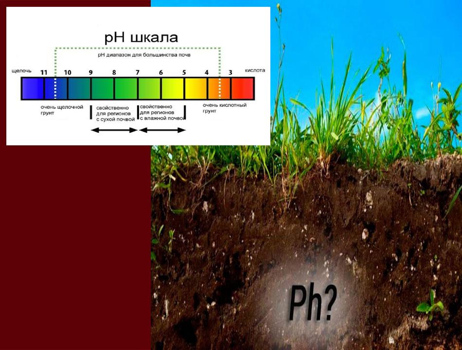 Проволочник предпочитает кислые почвы