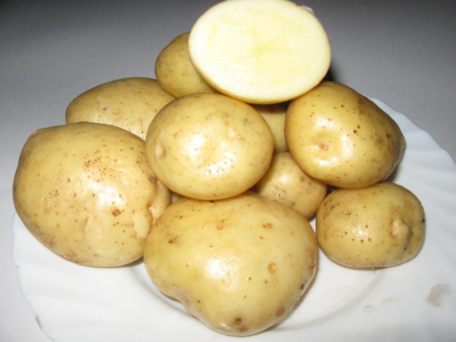 Клубни картофеля Сантэ