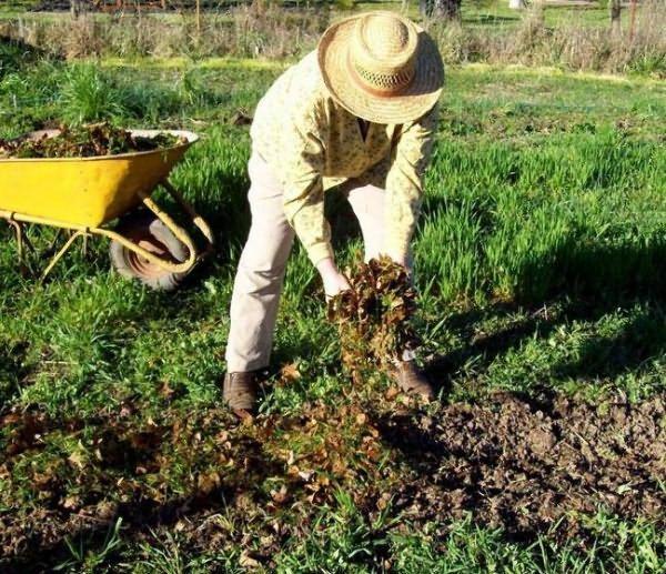 Внесение органики под картошку