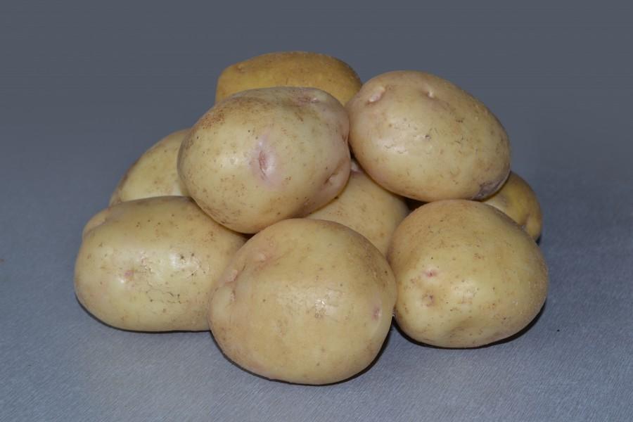 Клубни картофеля Невского