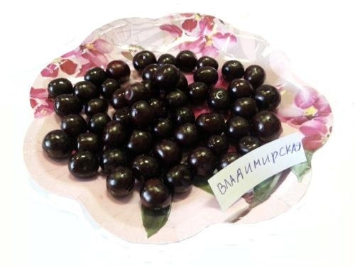 Плоды вишни Владимирская