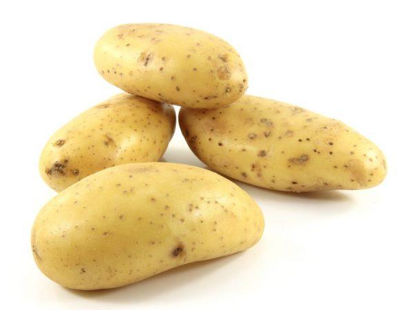 Клубни картофеля Императрица