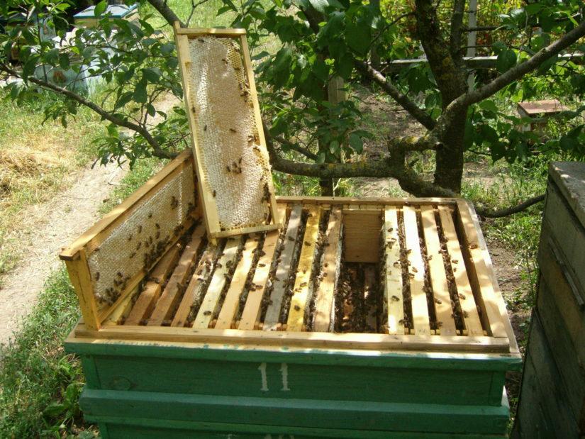 Пчёлы в улье