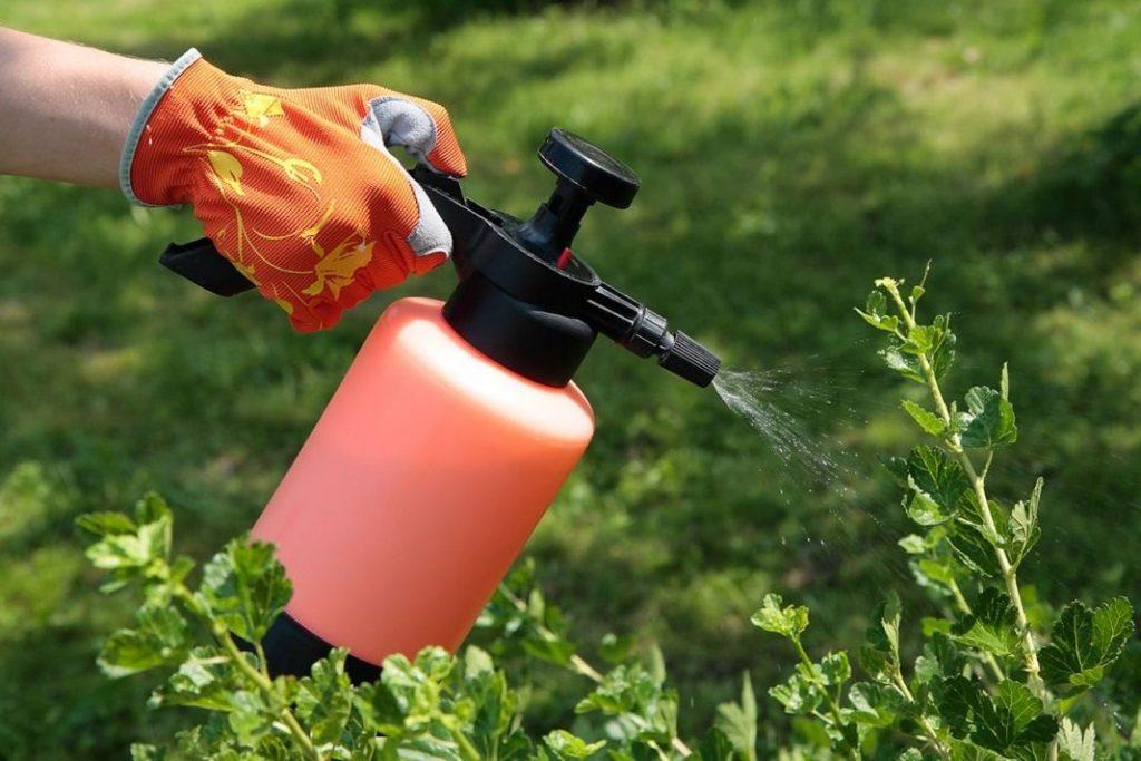 Обработка огорода от вредителей