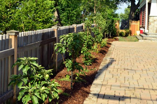 Пример разбивки яблоневого сада на приусадебном участке